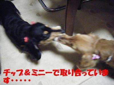 resize1288.jpg