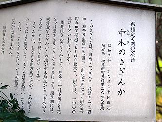 a1293.jpg
