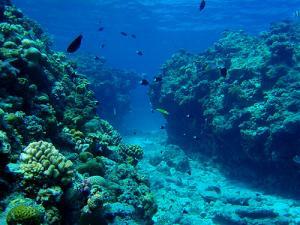 サンゴ街道