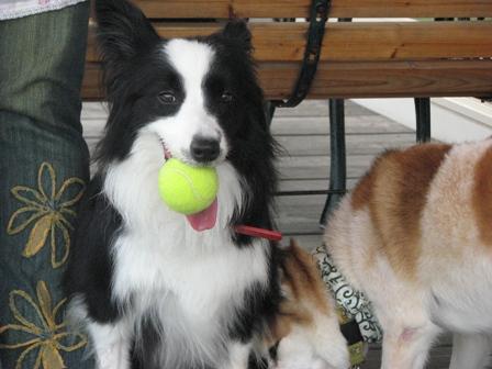 めぃは最近ボールが好きになりました