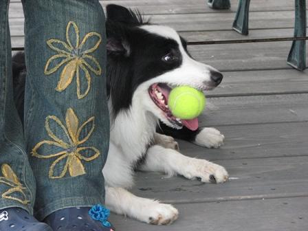 めぃはボールを放しません
