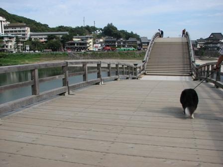 怖い犬と橋