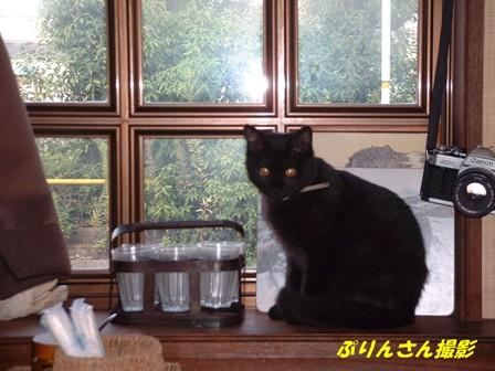 カフェシェルティの看板猫おはぎちゃん