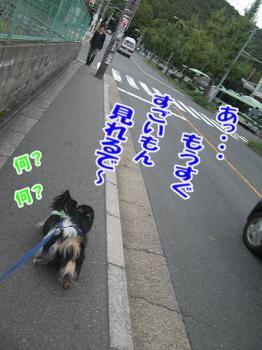 CIMG0312.jpg