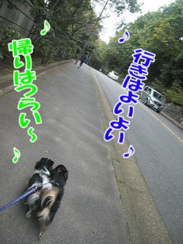 CIMG0316.jpg