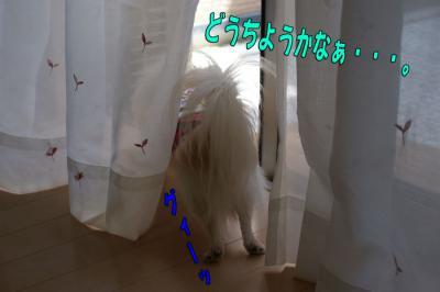 DSC09806-006.jpg
