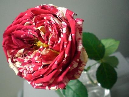 ピーボのバラ