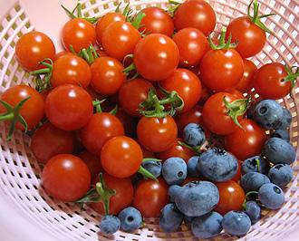 ミニトマト&ブルーベリー