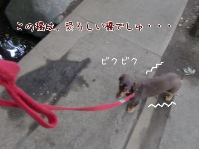 snap_chocola811_20096120830.jpg