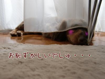 snap_chocola811_200961215229.jpg