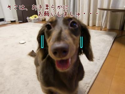 snap_chocola811_200973222315.jpg