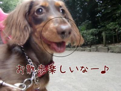 snap_chocola811_200996151335.jpg