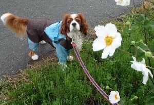 2008_0922画像0003周明菊