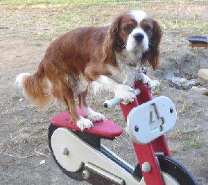 2008_1004画像0003バイク