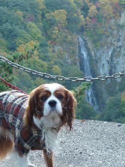 2008_1015画像0013滝1