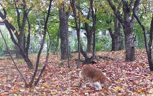 2008_1101画像0003公園1
