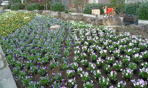 2008_1113画像0001花壇