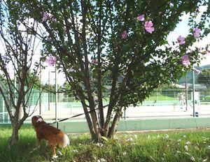 P1000060テニスコート2