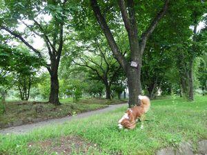 P1000072公園