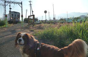P1000112電車