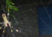 P1000315蜘蛛の巣