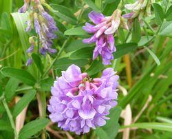 P1000380野の花