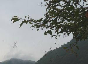 P1000437蜘蛛