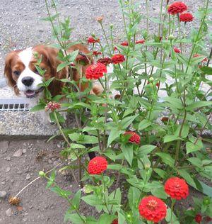 P1000715赤い花