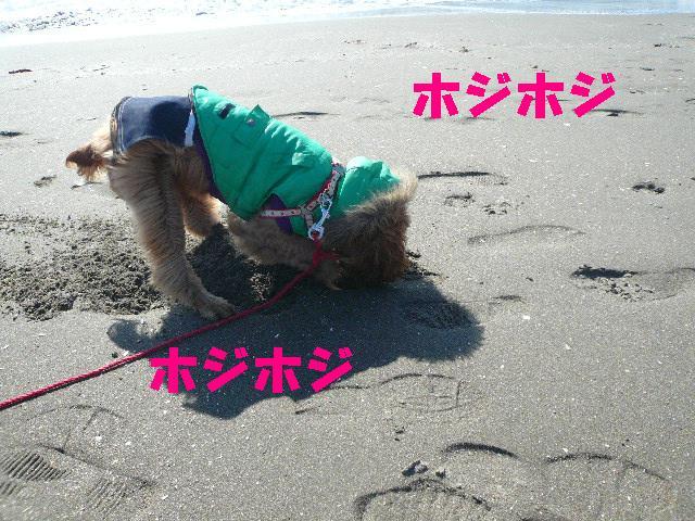 2009-2-8 ナル4
