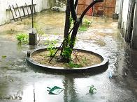 RIMG7044うちの庭も水浸し