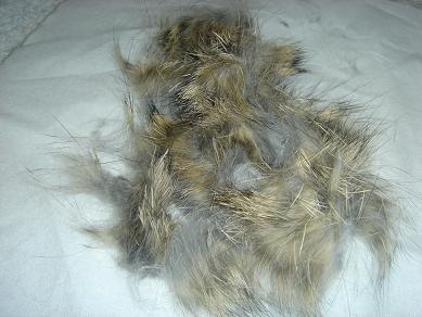 みんくんの毛