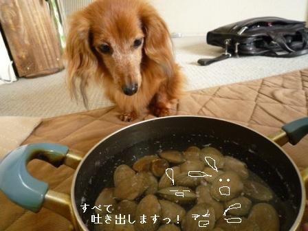 P1010339blog.jpg