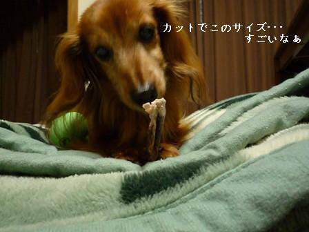 P1010382blog.jpg