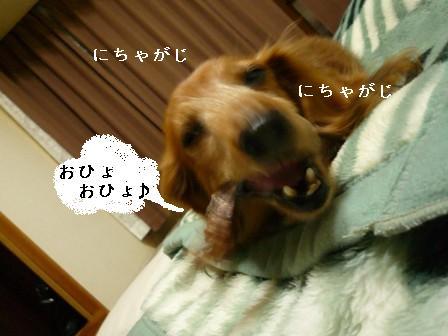 P1010424blog.jpg