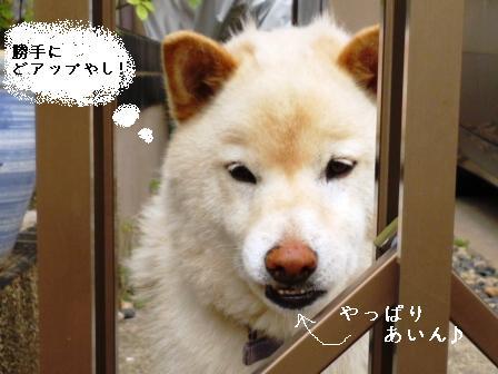 P1010461blog.jpg