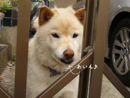 P1010462blog.jpg