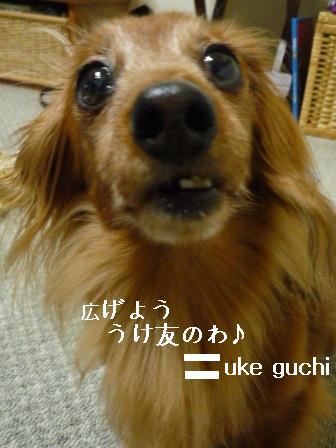 P1010571blog.jpg