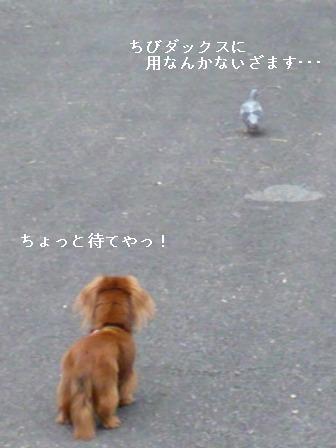 P1010573blog.jpg