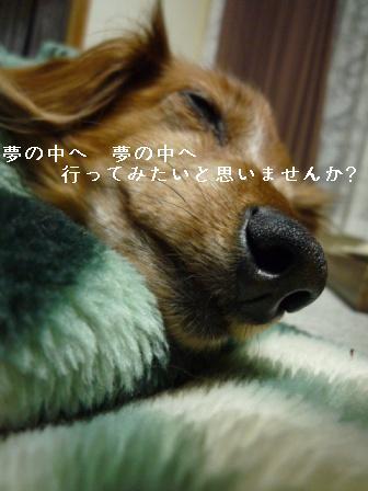 P1010579blog.jpg