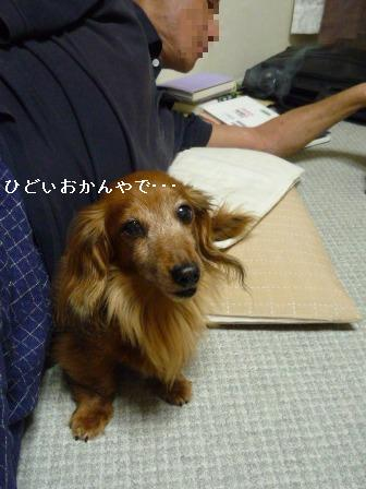 P1010672blog.jpg
