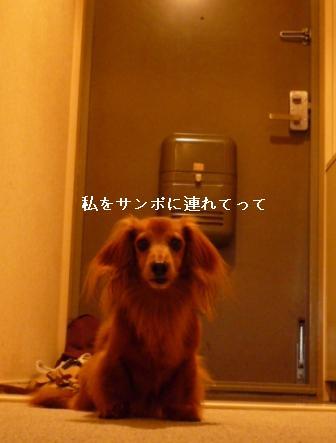 P1010923blog.jpg