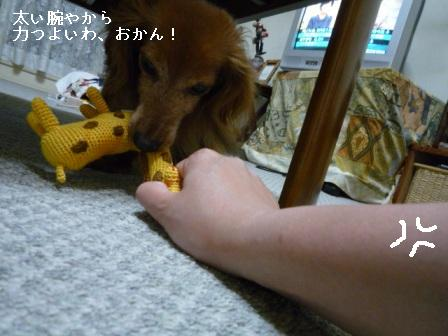 P1020596blog.jpg