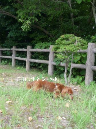 P1020696blog.jpg