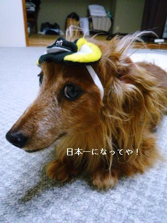 P1020711blog.jpg