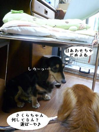 P102084blog.jpg