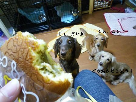 P1030011blog.jpg