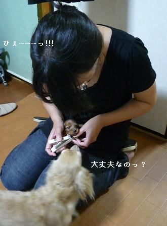 P1030466blog.jpg