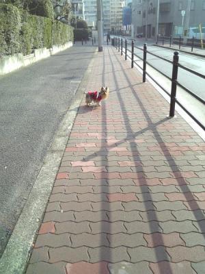 日当たりのいい散歩道