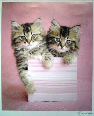 4月のカレンダーの猫ちゃんたち