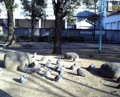 日なたぼっこの鳩さんたち